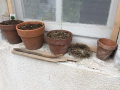 Pots and Nest (Dradny) Tags: france love nature poetry nest growing seedlings windowsill abandonednest foundnest