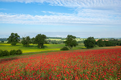 Cotswolds Poppies (jactoll) Tags: stowonthewold gloucestershire cotswolds summer morning poppies poppy landscape light colour sony a7ii zeiss 16 35mm f4 jactoll
