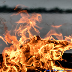 100 Days of Summer #24 - Flames (elviskennedy) Tags: wood camping summer camp orange lake hot wisconsin landscape outside fire us log fireplace energy unitedstates hiking smoke sony flames einstein logs warmth elvis radiation tent burning campfire flame burn shore heat physics convection camper wi kennedy warming campers combustion emc2 suring conduction kellylake rx1 mirrorless 100daysofsummer conservationofenergy wwwelviskennedycom elviskennedy rx1r rx1rii dscrx1rm2
