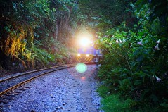 Train coming round a bend (bpsnaps) Tags: train mountain peru machupicchu choochoo