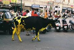 City cow (fisher.victor) Tags: city travel india film 35mm cow paint market mysore praktica mtl5