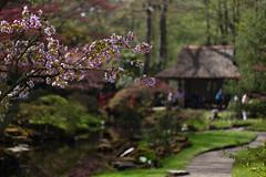 clingendael-7797 (Arie van Tilborg) Tags: japanesegarden hague thehague clingendael japansetuin clingendaelestate landgoedclingendael arievantilborg