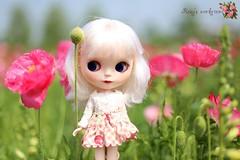 blythe...vanilla queen with poppy ^^