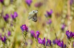 Between The Flowers (Bryn De Kocks) Tags: trees summer nature closeup butterfly southafrica photography canon50d