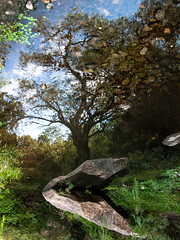 Regalo de la Naturaleza (Colo Eiguren) Tags: naturaleza tree reflex espejo rbol coloeiguren