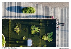 Fish pool color (Ilan Shacham) Tags: city people urban fish pool vertical israel telaviv cityscape shadows view fineart scenic koi lookingdown electra fineartphotography