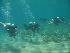 dedy and miriam and shmuel (acmt2001) Tags: sea fish sport coral aqua underwater  redsea scuba diving reef eilat aquasport