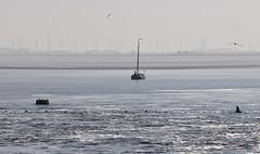 Eider (a.penny) Tags: sea wadden nikon tamron nordsee watt eider nothern 70300 d300 apenny stauwerk