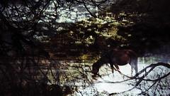 Antologia (Nia . . .) Tags: caballo merida laguna paramo mucubaji
