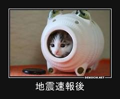 地震速報後 #地震 #猫 #地震速報 (Demochi.Net) Tags: life cute sexy japan fun japanese motivator culture 日本 ペット 猫 demotivator 金 家族 結婚 ゲイ 女 子供 おっぱい 愛犬 政治 社会 巨乳 文化 眼鏡 教育 demotivators 経済 女性 初恋 r18 女子 カップル 子猫 女装 お笑い motivators 会社 少子化 企業 ユーモア 恋 悪い 格差 風刺 一言 デモチ 大喜利