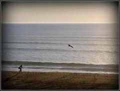 l'ocan..........! (LILI 296 ...) Tags: surfer coucher sable t vague plage mouette landes ocanatlantique canonpowershotg12