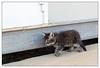 Naqoura : chatons