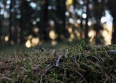 Lay low (Forat Alawsii) Tags: camping autumn trees light shadow black cold tree green fall wet beautiful up grass yellow closeup forest dark rocks afternoon close darkness sweden stockholm low dramatic hide late fabulous bushes lay jrvafltet rinkeby