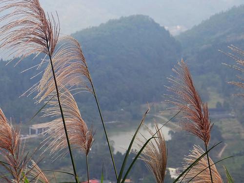 向天湖光天高山 (97).jpg