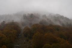 Fog (Wrinzo) Tags: italy mountain alps italia piemonte alpi montagna valgrande vald scaredi piedomnt parconazionaledella