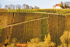 Die Aufsteiger  (Explored) (fotomanni.de) Tags: nordheim vogelsburg mainfrankenweinfranken