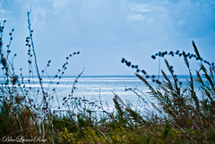 Way to Mediterranean... (BlueLunarRose) Tags: blue light sea sky plants cloud seascape reflection green beach nature water sparkles glitter clouds skyscape landscape coast mediterranean glow horizon ground shore land waterscape the4elements sal75300 sonyalphadslra200 bluelunarrose