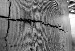 Tree Age (hin_man) Tags: sanfrancisco tree age exploratorium tamron1735mmf2840 pentaxk5
