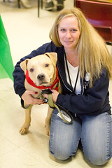 Nikki and Biscuit (Save-A-Pet Adoption Center) Tags: dog brown male pitbull biscuit staff adopted rainbowbridge saveapet holidayopenhouse 2013