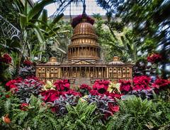 Botanic Gardens (Deb Felmey) Tags: christmas garden dc washington natural botanic