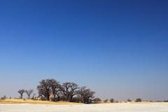 Nxai Pan (Dindingwe) Tags: botswana baobab nxaipan bainesbaobabs