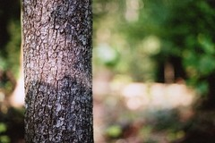 (Heather Floccari) Tags: tree film nature 35mm spring pretty bokeh