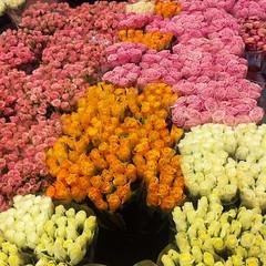 เลือดไหลกลับบ้าน  แม่ค้าพร้อมใจกันฟัน (ราคา) หัวแบะ..!!! #คืออัลไล #แพงเกินไป #พูดเลย #fluer #flower #floral #bangkok #thailand