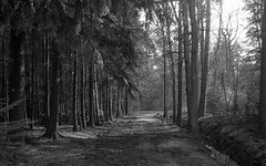 (Sophie Teunissen) Tags: trees bw white black forest bomen woods minolta analogue bos zwart wit zw woud analoog {vision}:{outdoor}=0971 {vision}:{street}=0773