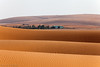 The Dunes (TARIQ-M) Tags: sky cloud mountains art texture sahara water landscape sand picnic waves pattern desert ripple patterns dunes wave camel waterfalls palmtree abstraction ripples camels riyadh saudiarabia hdr blowingsand canonef70200mmf4lusm هى canonef1635mmf28liiusm dahna canoneos5dmarkii canonefs18200mmf3556is canonef100400f4556l tariqm tuwaiqmountains aldahna tariqalmutlaq 100606169424624226321poststariqm1