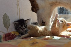 Care (DaiRut) Tags: dog kittens care