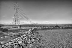 DSC_8418 (RHMImages) Tags: park ca blackandwhite bw monochrome landscape nikon fremont donedwards d600 donedwardssanfranciscobaynationalwildliferefuge