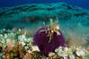 Sphaerechinus granularis (Jaime Franch) Tags: diving ibiza formentera buceo baleares labota erizodemar sphaerechinusgranularis tokinaatx107dxfisheyeaf1017mmf3545 mediterráneo visemanafotografíasubmarinaformentera erizovioláceo
