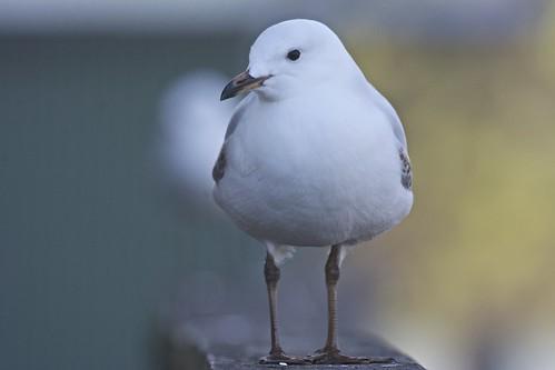 Introspective Seagul
