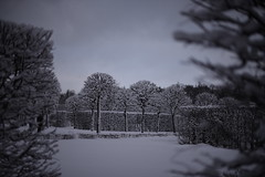DSC_2883 (art_pi) Tags: park trees winter sky bw sculpture snow love saint vintage wow grey lights cool nikon day cloudy russia background patterns petersburg palace catherine situation emotions selo 24mp 750d tszars