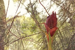 Hidden Flower Green Branches (everyday sh_ter) Tags: park beach forest sydney waterfalls kookaburra wattamolla garie royalnationalpark audley stanwell hackerriver