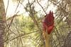 Hidden Flower Green Branches (everyday sh⊙_☉ter) Tags: park beach forest sydney waterfalls kookaburra wattamolla garie royalnationalpark audley stanwell hackerriver