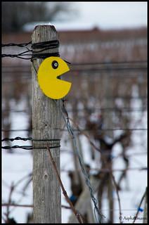 Pac-Man im Weinberg / Pac-Man in the vineyard