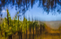 edwinloyolaNewYorkPortfolioReviewSummer02 (Edwin Loyola) Tags: autumn winter summer abstract fall nature seasons fineart fourseasons icm esl intentionalcameramovement edwinsloyola edwinloyola edwinloyolaphotography eslphotography