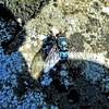 L'art du camouflage (domiloui) Tags: france macro animals lumiere animaux lorraine couleur insecte mouche insectes ambiance cooliris blinkagain
