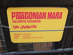 New signage for the Patagonian Mara (oldandsolo) Tags: fauna zoo rodent uae abudhabi mara signage signboard unitedarabemirates patagonianhare zoologicalgardens smallmammals dolichotispatagonum patagonianmara informationsign patagoniancavy dillaby emiratesparkzoo samhaabudhabi