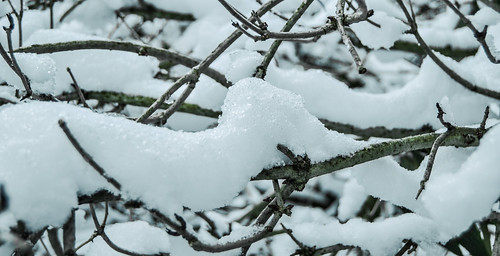 Snow, From FlickrPhotos