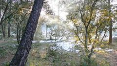 Paysage au petit matin - Velleron - Vaucluse - Provence-Alpes-Cted'Azur - France (vanaspati1) Tags: morning trees light sun snow france soleil lumire hiver au arbres neige paysage froid sud petit matin vaucluse provencealpesctedazur velleron vanaspati1