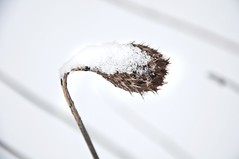 Hard winter (Kristin Sig) Tags: winter snow nature iceland hard survival