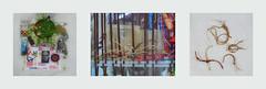 Tapestry Diary 28.3.: Easter Monday: Presents, Exhibition, Thread from Rolled Roast Tapisserie Tagebuch Ostermontag Osternest Schnittlauch, Auswahl Ostergeschenke, Osterspaziergang 21er Haus: Oberhuber, Edgar Knoop, Abstract Loop Austria, Faden Rollbraten (hedbavny) Tags: vienna wien food abstract rabbit bunny thread museum easter subway austria mirror österreich spring flyer essen time spiegel diary egg tapis warp exhibition meal weaver ostern falter kalender folder tagebuch mittagessen weber ei hase loom tapestry ausstellung zeit teppich mittag abstrakt frühling spaziergang rundgang osterhase weft webstuhl osterei eastermonday ostermontag tapisserie faden reflektor 813 wotruba karwoche rollbraten bindfaden weavingloom oswaldoberhuber gewebt fritzwotruba oberhuber teppichweber 21erhaus hedbavny ingridhedbavny zeitlicheabfolge tapistura