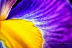 Irisblte (strack_frank) Tags: pink iris flower macro wonderful samsung blumen blume garten abstrakt bltenblatt nx30