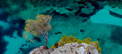 Calanque d'En-Vau (HannahGE) Tags: travel sea cliff france tree water rock walking coast marseille mediterranean turquoise hike provence cassis calanques
