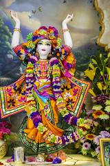 2016.05.31 (Darshan pictures ISKCON, Hungary) Tags: flowers color temple hungary religion budapest altar turban prabhupada darshan deities krisna iskcon gauranga gauranitai nityananda