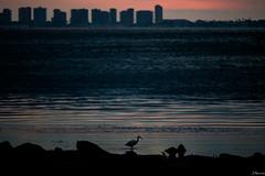 Sombra. (juliosabinagolf.) Tags: sunset costa agua nikon amanecer nikkor marmenor serenidad comunidadespaola d3300
