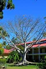 DSC_43331 (riverrock777) Tags: sky naturaleza building tree nature landscape day exterior view outdoor wildlife edificio sunny paisaje cielo rbol vista da soleado vidasilvestre