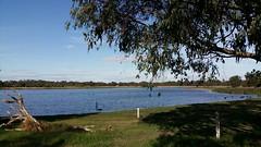 at the water level markers (ClareSnow) Tags: autumn lake water australia naturereserve perth eucalyptus gumtree waterlevel eucalyptusrudis floodedgum lakegwelup waterlevelmarker lakegwelupreserve